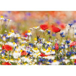 1800167166-buitenschilderij-wild-flower-mixed-pb-collection-70x130