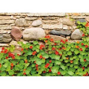 1800181166-buitenschilderij-nasturtium-wall-pb-collection-70x130