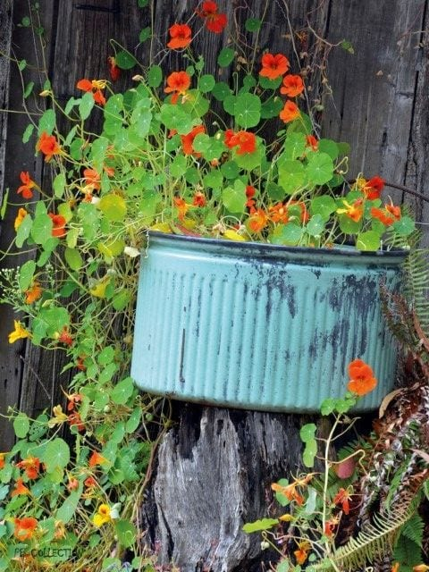 1800184165-buitenschilderij-nasturtium-old-tub-pb-collection-70x130