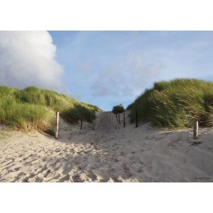 1800388166-buitenschilderij-dune-path-collection-70x130